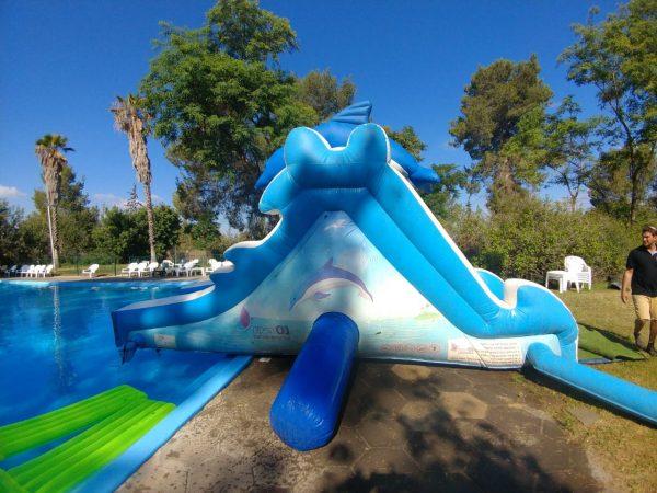 דולפין 600x450 - מגלשת מים דולפין לבריכה
